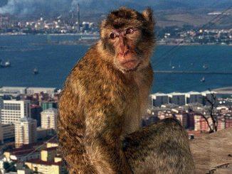 UK interest trade Gibraltar